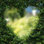hueco en un cesped con forma de corazon